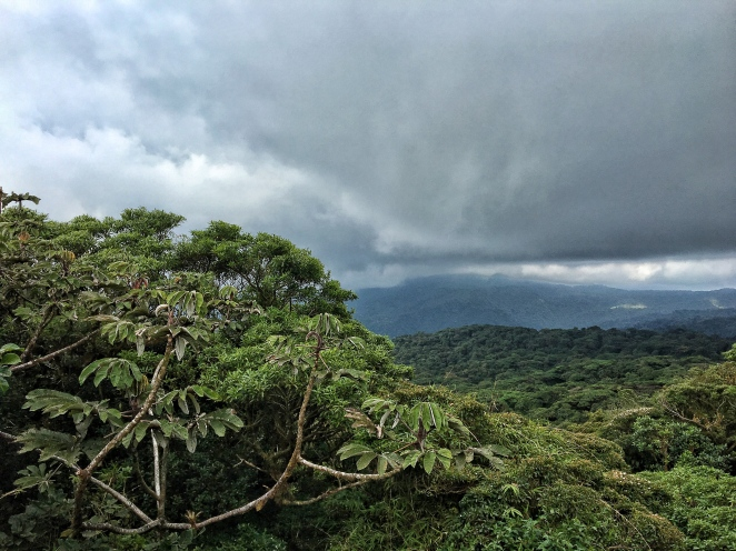 View from the highest top of the trail - the cloud forest is indeed pretty cloudy