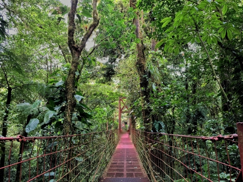 The famous hanging bridge on the Wilford Guidon trail