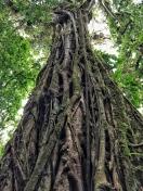 My favorite tree!