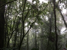 Misty-ness in the forest of cloudy-ness