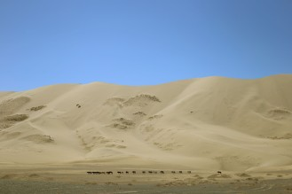 A pretty usual sight in Mongolia: wild horses prancing around.