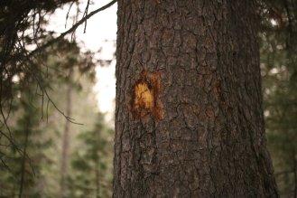Tree marking for navigation