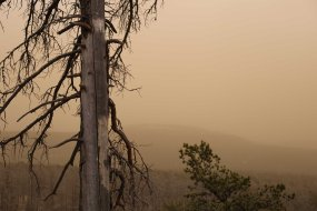 Bogd Khan Uul trees in sand storm
