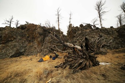 Tent next to old tree on top of Bogd Khan Uul